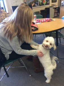 Hopkinton High School senior Brittany Power plays with a therapy dog during De-stress week. Photo by Alli McNulty.
